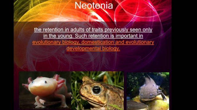 Forever young: neotenia, plasticità e invecchiamento – Dott.ssa Giulia Garaffo
